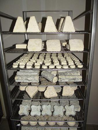 fromage de chevre fermier Ferme de breviande le trefle